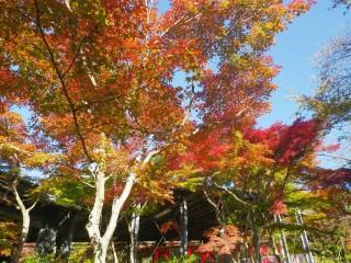 2012 11 16_紅葉_1852