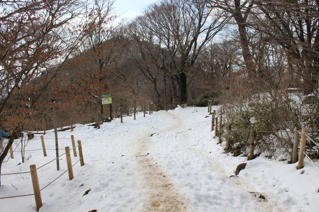 登山道2015.2.21(1)