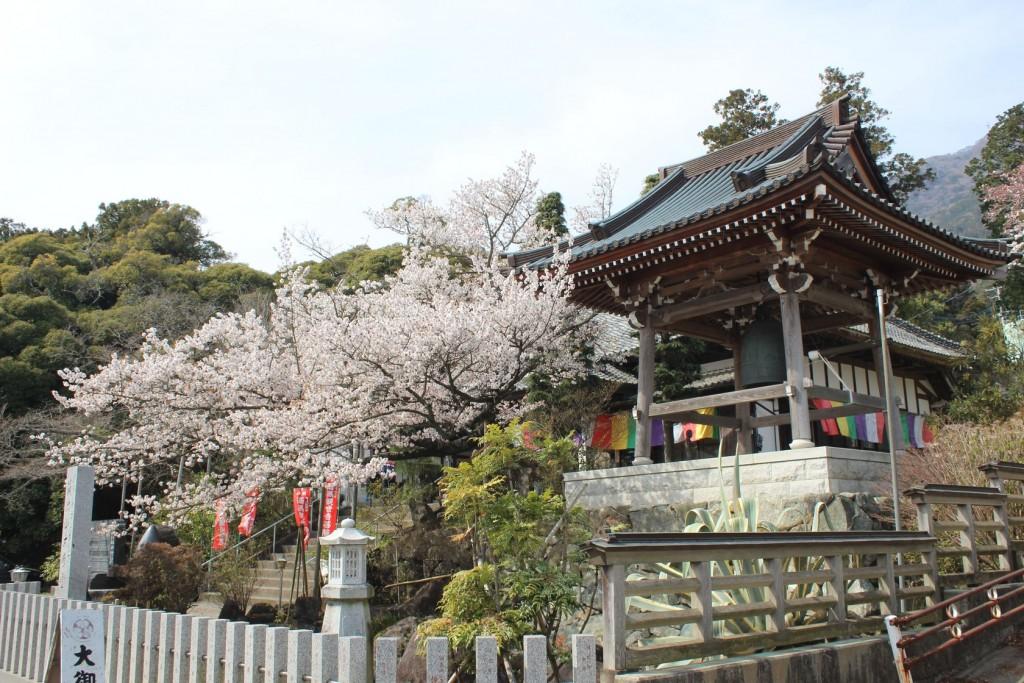 大御堂桜2016 (1)